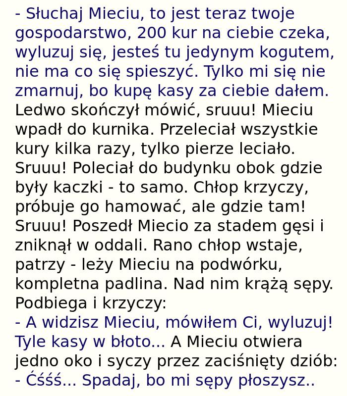 http://zgrywne.pl/upload/068c7b2c49e55360e5e0fb076a07e23a.jpg