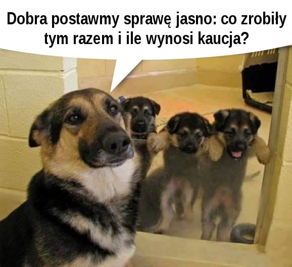 Psiaki rozrabiaki :)