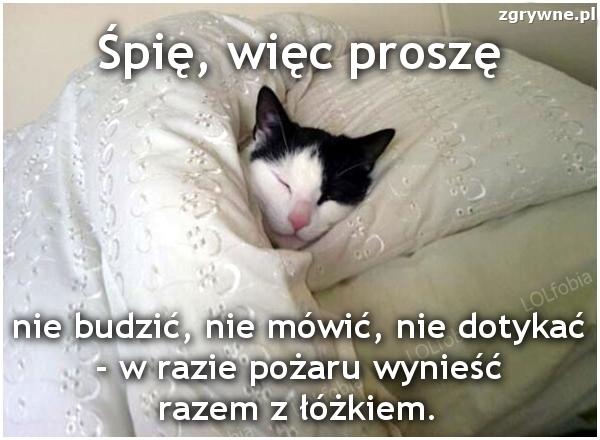 Śpię, więc proszę nie budzić, nie mówić, nie dotykać...