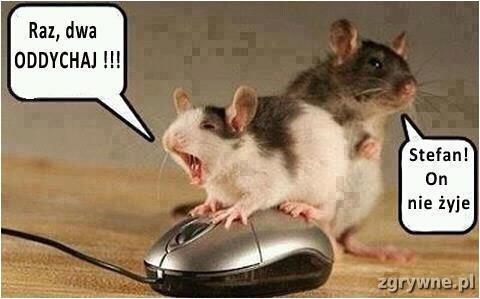 Śmieszne memy o myszkach...