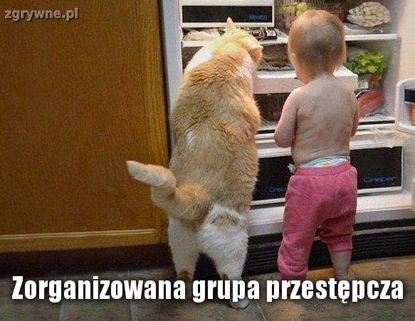 Wesołe memy o kotach
