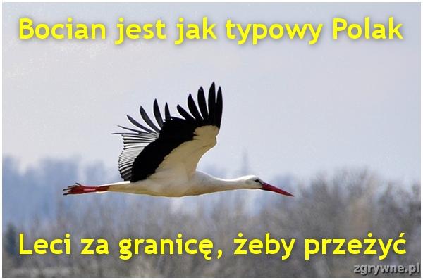 Cała prawda o Polakach pracujących za granicą...