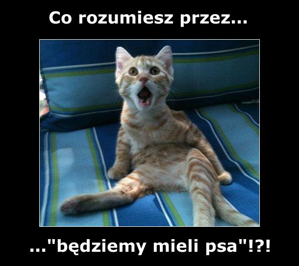 Kotek domaga się wyjaśnień... :)