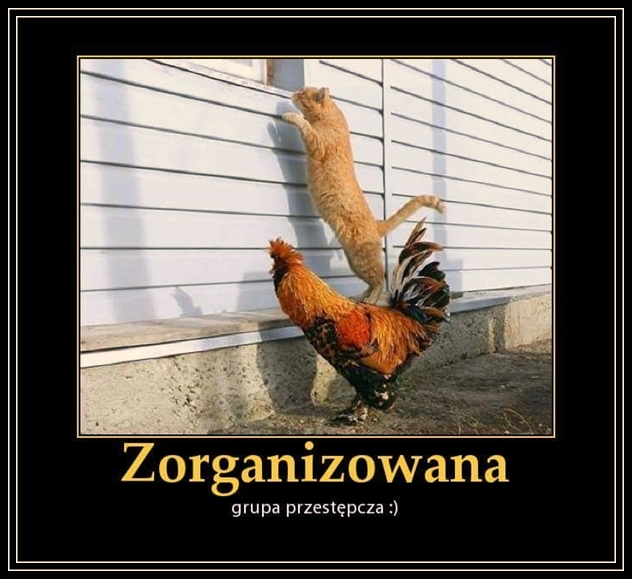 Zorganizowana grupa przestępcza...:)