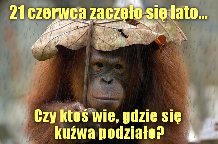 Deszczowe lato...
