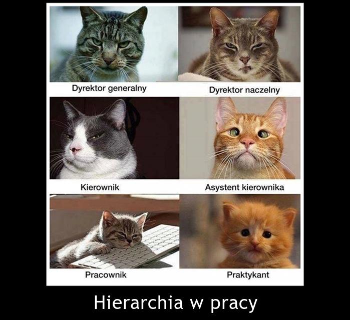 Hierarchia w pracy
