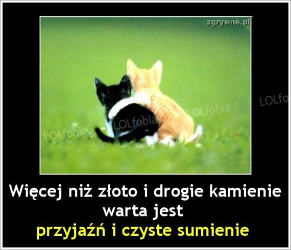 Mem o przyjaźni...