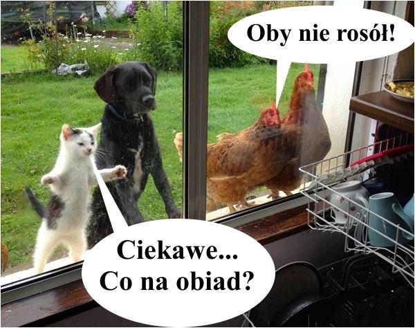 Ciekawe... Co na obiad?
