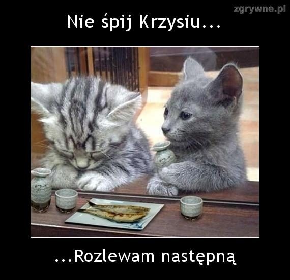 Fajne memy z kotami na weekend
