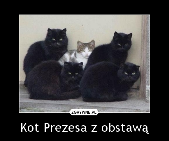 Kot Prezesa z obstawą...