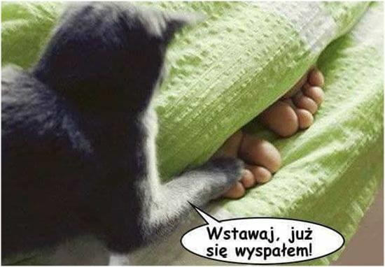 Wstawaj, już się wyspałem!