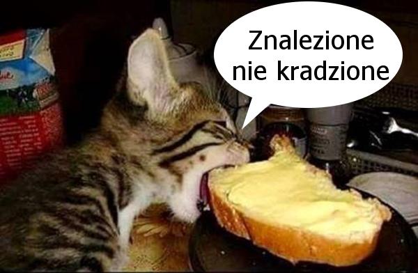 Fajne memy z kotkami...