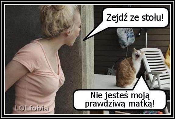 Rezolutny kot... :)