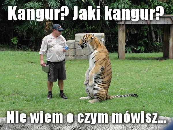 Kangur? Jaki kangur? Nie wiem o czym mówisz...