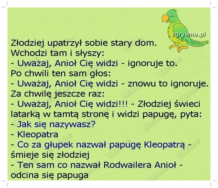 Ha ha ha ...Mądra ta papużka :)