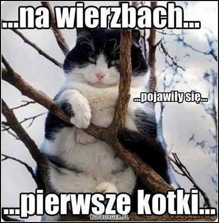 Pierwsze kotki na wierzbach... :)