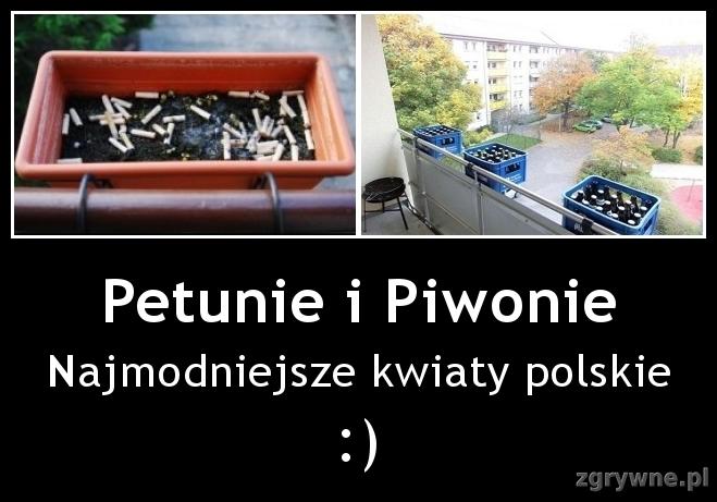 Petunie i Piwonie. Najmodniejsze kwiaty polskie :)