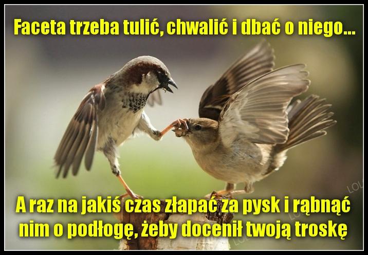Sentencje O Facetach Na Wesoło Zgrywnepl Humor I