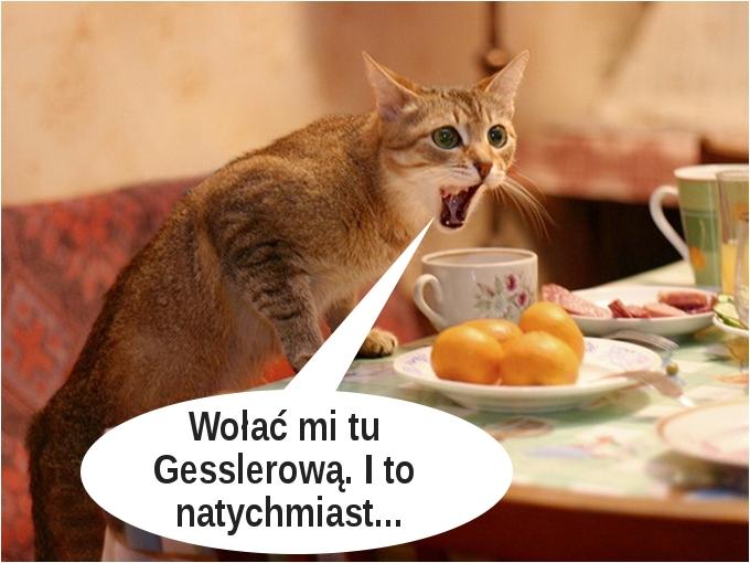 Zniesmaczony kotek... ;)