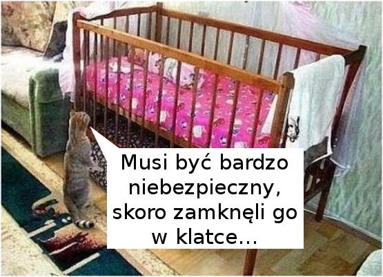 Zdziwiony kotek :)