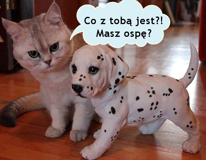 Troskliwy kotek... :)