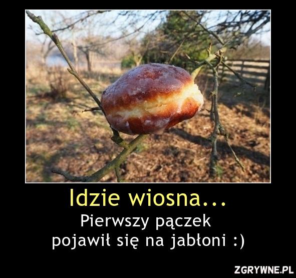Idzie wiosna... Pierwszy pączek  pojawił się na jabłoni :)