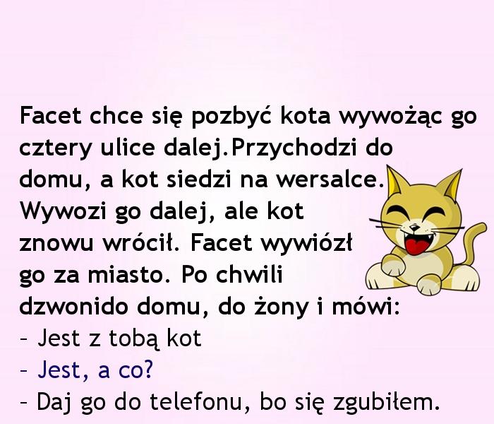 Kot mądrzejszy od pana... :)