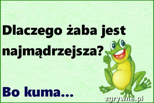 Dlaczego żaba jest najmądrzejsza? :)