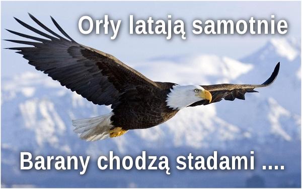 Orły latają samotnie. Barany chodzą stadami ...