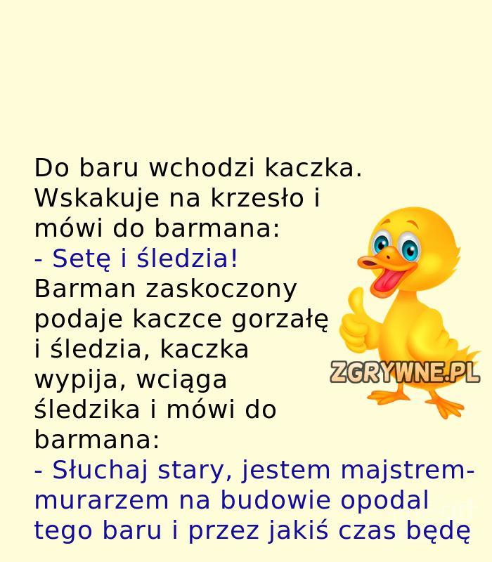 Niepospolita kaczka... :)