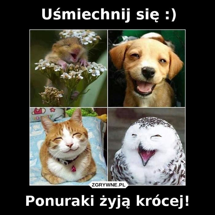 Uśmiechnij się :) Ponuraki żyją krócej!