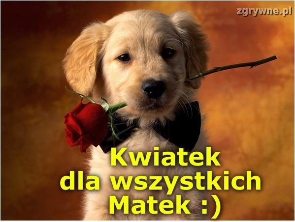Kwiatek dla wszystkich Matek :)