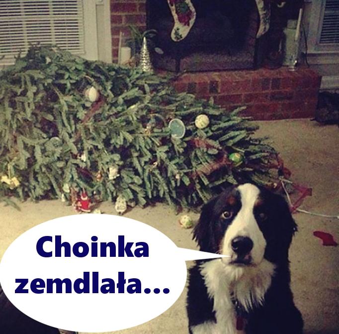 Choinka zemdlała...