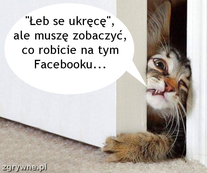 Ciekawski kotek... :)